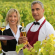 Two wine waiters posing in vineyards — Stock Photo
