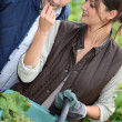 A couple harvesting grapes. — Stock Photo #8326261