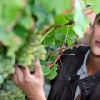 Closeup of woman looking at grapes in a vineyard — Lizenzfreies Foto