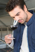 Oenologist sampling glass of red — Stock Photo