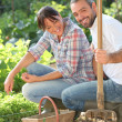 Couple gardening — Stock Photo #8334759