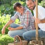 Couple gardening — Stock Photo