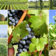 Stock Photo: Vineyard Landscape
