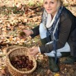 Woman picking chestnuts in woods — Stock Photo