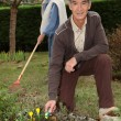 Grandparents gardening — Stock Photo