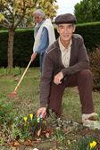 Бабушки и дедушки Садоводство — Стоковое фото