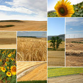 Cultivated fields: miscellaneous shots — Stock Photo