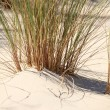 Reeds on beach — Stock Photo #8410189
