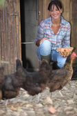 A woman gathering eggs in a hen house — Stock Photo