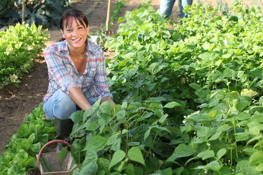 Woman Gardening Stock Photo Photography33 8419894