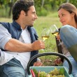 A couple of wine producers toasting - Stock Photo