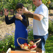 Father and son picking apples — Stock Photo