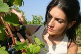 Portrait of woman observing a bunch of grapes — Stockfoto