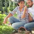 Farmer and wife gardening — Stock Photo