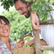 Farmer couple picking fruit — Stock Photo