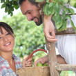 Farmer couple picking fruit — Stock Photo #8461549