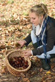 Young woman gathering chestnuts — Stock Photo