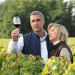 Couple tasting wine in vineyard - Stock Photo