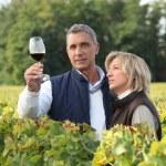 vino degustazione di coppia nella vigna — Foto Stock