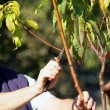 Man cutting branches — Stock Photo
