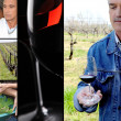 Oenologist, wine maker, vines and a red wine glass - Stockfoto