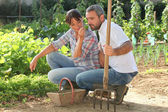 Couple picking produce in a vegetable garden — Stock Photo