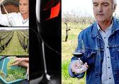Oenoloog, wijn maker, wijnstokken en een rode wijn glas — Stockfoto