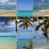 Palm trees, exotic island, pleasure boats — Stock Photo