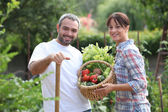 Couple picking vegetables — Stock Photo