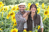 A couple of farmers in a sunflowers field — Stock Photo