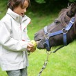 Stock Photo: Boy feeding apple to donkey