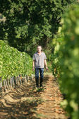 Man walking in the vineyards — Stock Photo