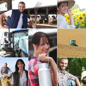 Life on the farm collage — Stock Photo