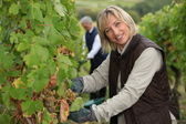 Wife and husband working in their vineyard — Stock Photo