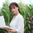 Farming couple with a laptop in a field of corn — Stock Photo
