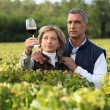 Couple checking wine in a vineyard — Stock Photo