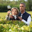Couple checking wine in a vineyard - Stok fotoğraf