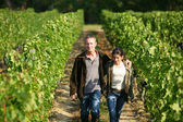 Couple walking in their vineyard — Stock Photo