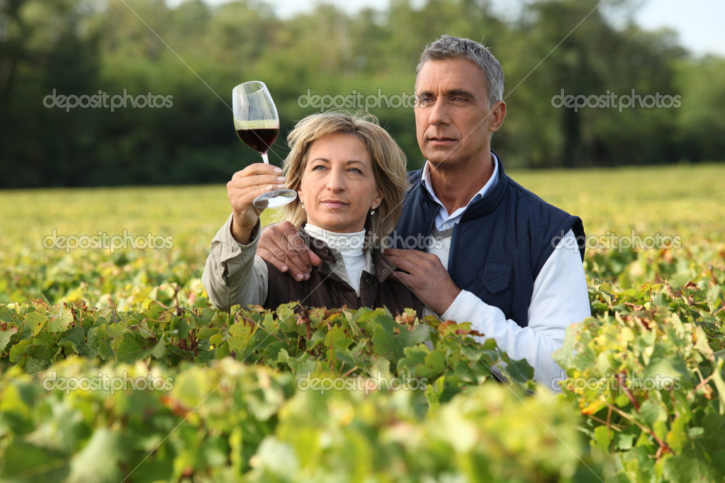 Couple checking wine in a vineyard  Stock Photo #8664475
