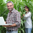 Sweetcorn farmers — Stock Photo