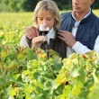 Couple tasting wine in a vineyard - Stock Photo