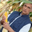 Stock Photo: Corn farmer