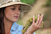 Woman looking at grapes — Stock Photo