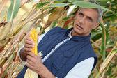 Corn farmer — Stock Photo