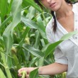 Stock Photo: Agriculturist stood in corn field