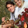 Couple gathering mushrooms in basket — Stock Photo