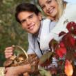 Couple gathering mushrooms in basket — Stock Photo