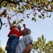Father and son picking apples from a tree — Stock Photo