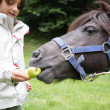 Little boy feeding a horse — Stock Photo