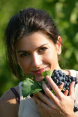 Woman gathering grapes in a vineyard — Stock Photo